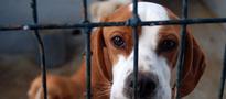 Nie tylko twój wiek zdecyduje o obowiązku zapłacenia podatku od psa